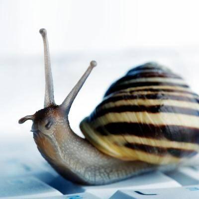 b2ap3_thumbnail_snailslow400.jpg